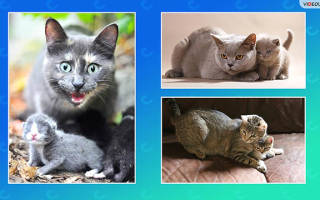 Как заботятся о своем потомстве домашние животные