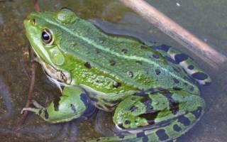 Животный мир болот