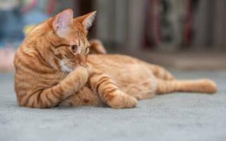 Как сдать анализ мочи коту