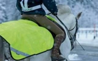 Чем кормить лошадей зимой