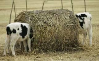 Витамины для роста бычков