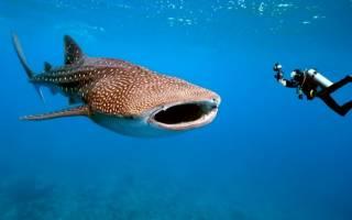 Фото самых больших рыб