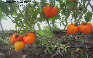 Томат русский оранжевый