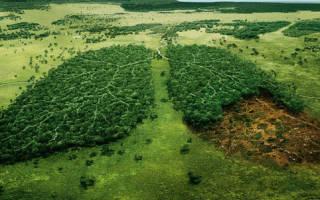 Исчезновение растений и животных