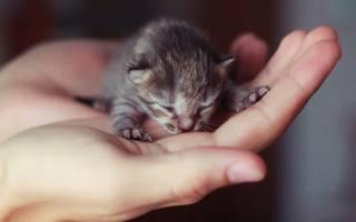 Соски для котят