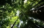 Растительный мир тропических лесов