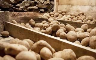 Где хранить картошку