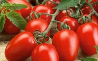 Маруся томат отзывы