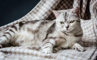 Сколько беременность у кошки