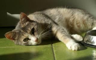 Панкреатит кошек лечение