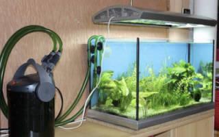 Работа фильтра в аквариуме