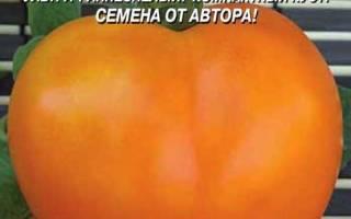 Золотое сердце томат