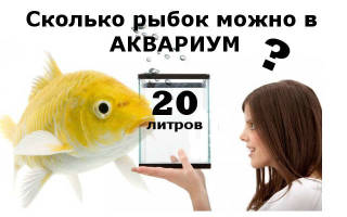 Сколько рыбок в аквариуме