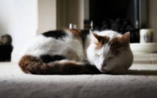 Чем усыпить кошку