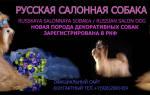 Русская салонная порода