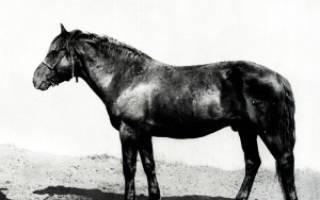 Молочные породы лошадей