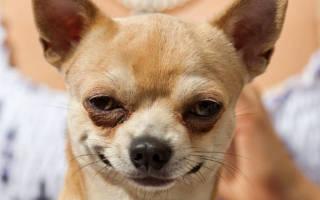 Сколько продолжительность жизни собаки?
