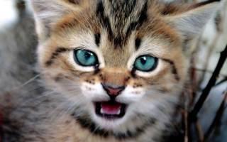 Котенок очень агрессивный