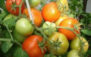Супербомба томат отзывы