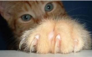 Надо ли кошке стричь когти