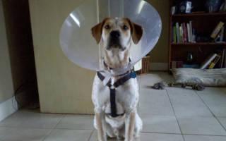 Конус для собак