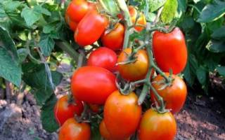 Акварель томат отзывы