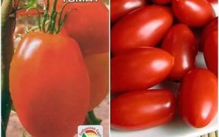 Княгиня томат отзывы