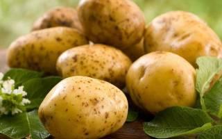 Картофель зекура описание сорта