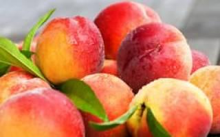 Персик для Подмосковья