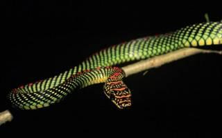 Украшенные древесные змеи