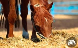 Суточный рацион лошади