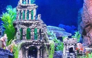 В большом аквариуме