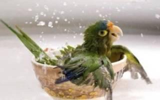 Какую воду давать попугаю
