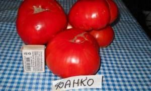 Данко томат отзывы