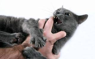 Как отучить кота кусаться за руки