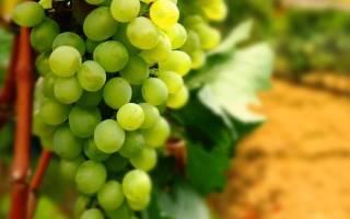 Как мыть виноград?