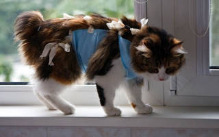 Попонка для кошки своими руками