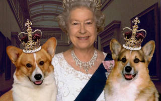 Королевская собака англии