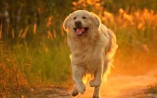 Свисток для собаки