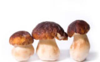 Как заморозить белый гриб