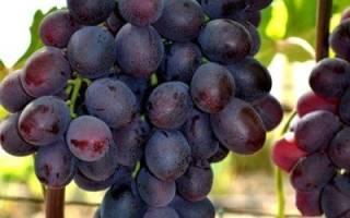 Виноград сорт подарок несветая