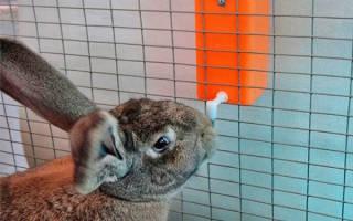 Поилка для кролика