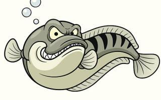 Змееголов рыба аквариумная