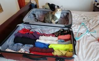Стресс у кота после переезда