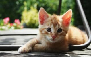 Рыжий кот как назвать
