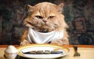 Почему кот много ест