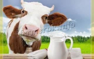 Молоко телка дала