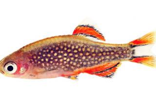 Галактика рыбка содержание