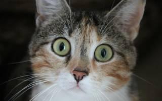 Как помочь бездомным кошкам?