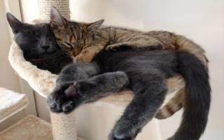 Кот во сне дергает лапами